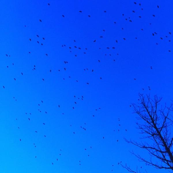 Viele Vögel am Himmel